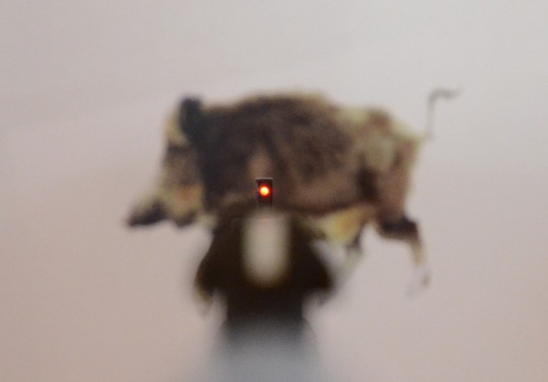 LED-Leuchtkorn zur Jagd auf Schwarzwild